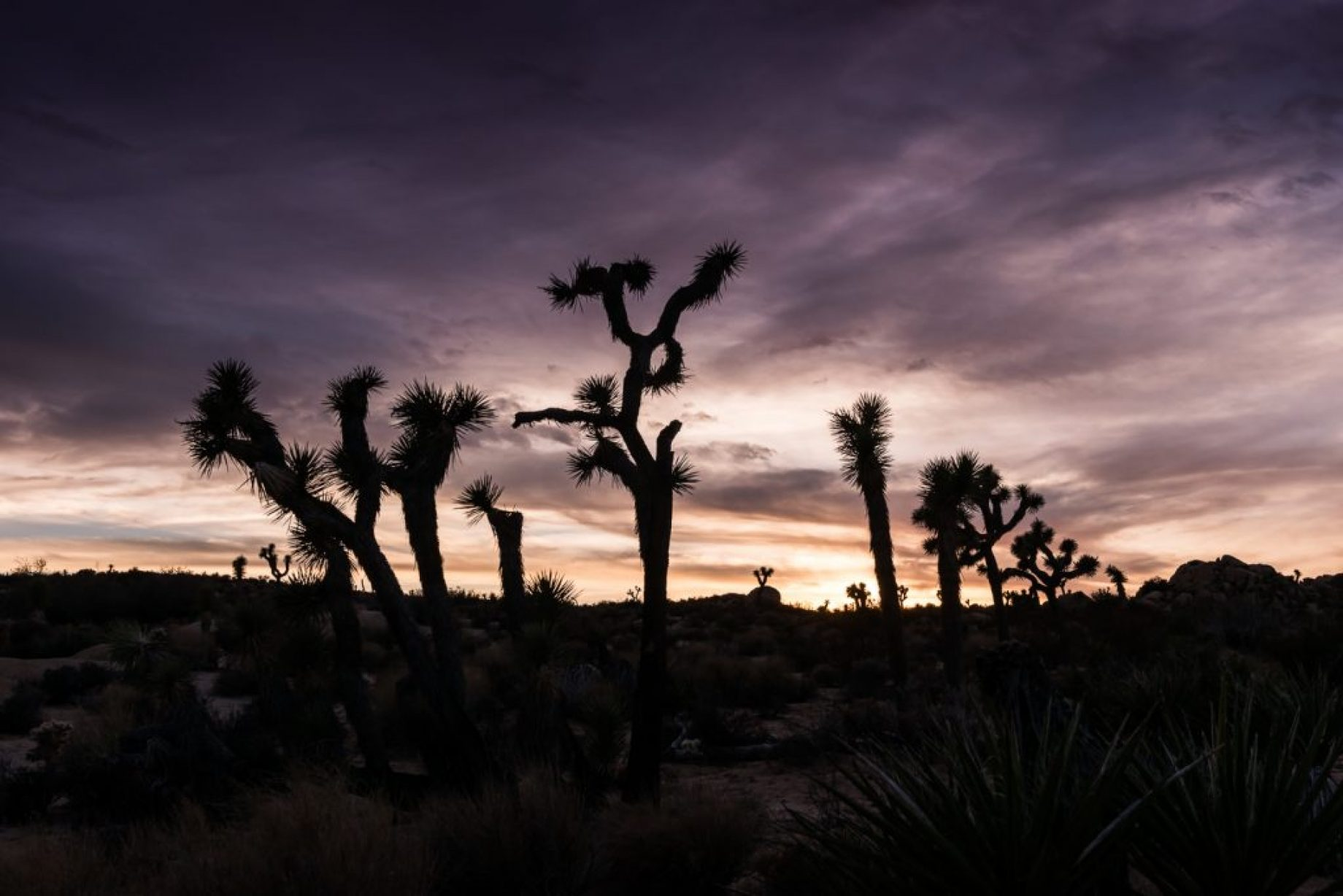 Joshua Tree - studio MAHA © Landscape Photography